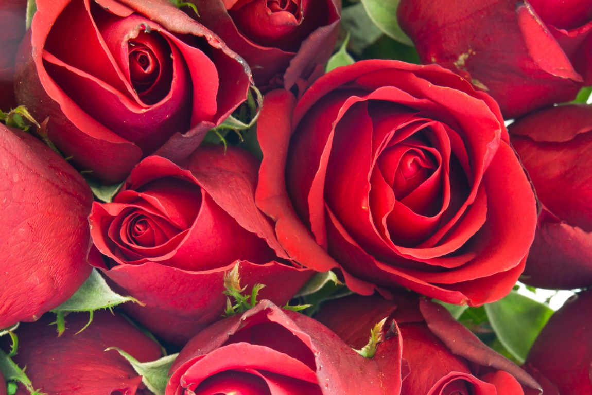 cut flowers industry in the USA