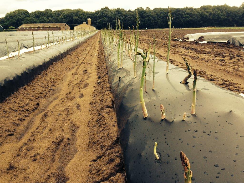 Obstacles to the use of biodegradable mulching