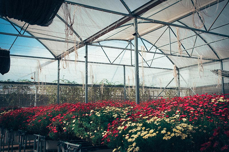 The colour of plastic covers for greenhouses. Photo by Nguyen Thu Hoai on Unsplash