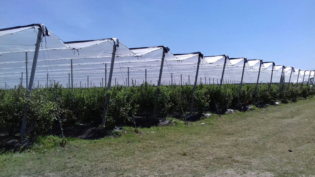 Why is it necessary to protect fruit trees?