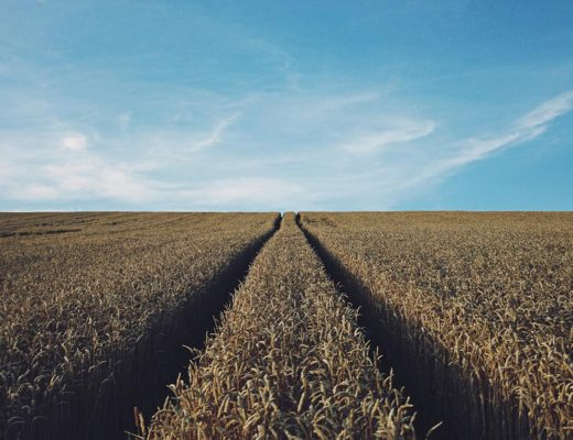 Crop value and productivity in USA. Photo by Rasmus Landgreen on Unsplash