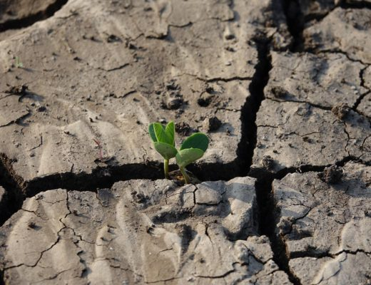 Crops in drought conditions. Designed by Lachetas / Freepik