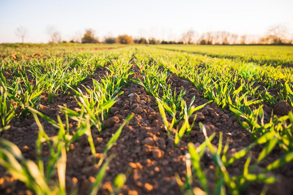 Online agriculture courses.
