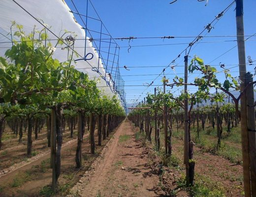 Fruit cultivation covers - agriculture plastics