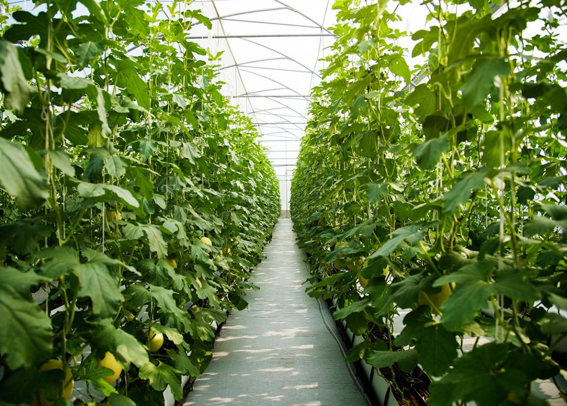Cultivanting under high tunnels in Canada. Designed by rawpixel.com / Freepik