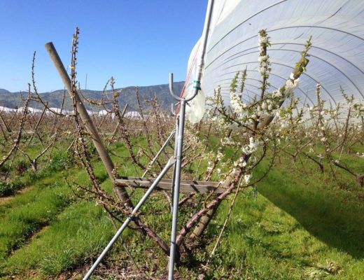 High tunnels to manage climate change