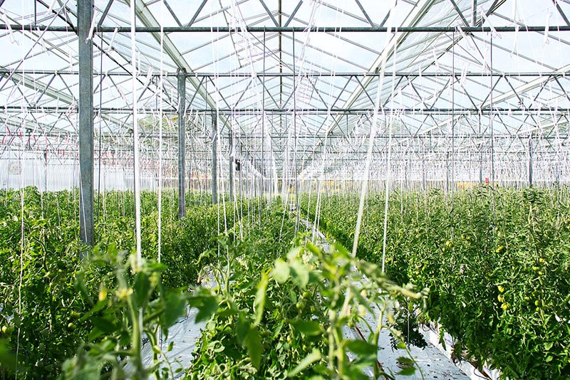 How to control temperature in Greenhouses