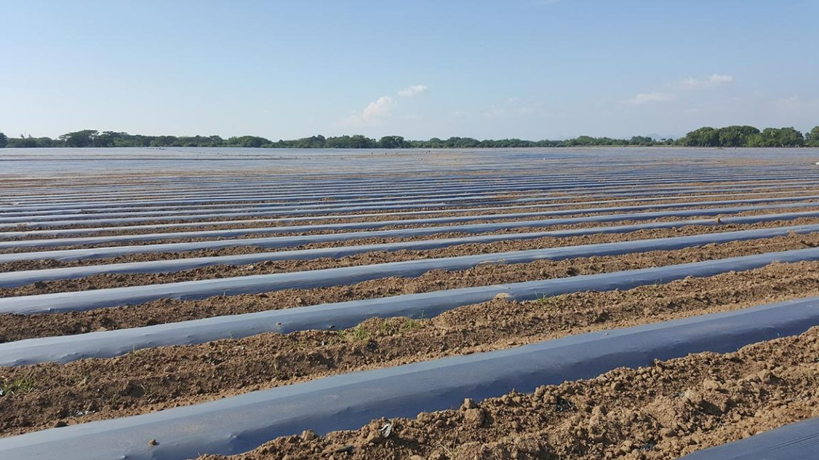 plastics to disinfect agricultural soils