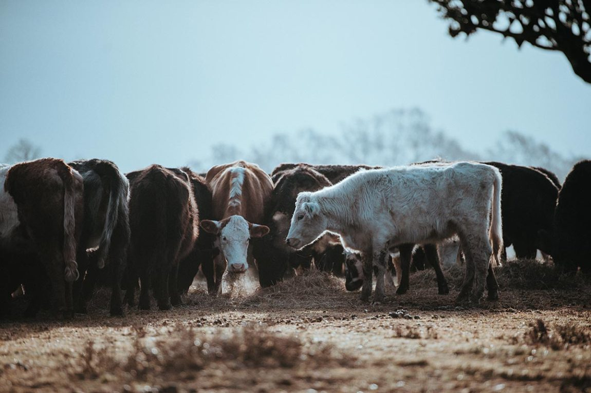 Mycotoxin problems storing animal food (Photo by Annie Spratt on Unsplash)