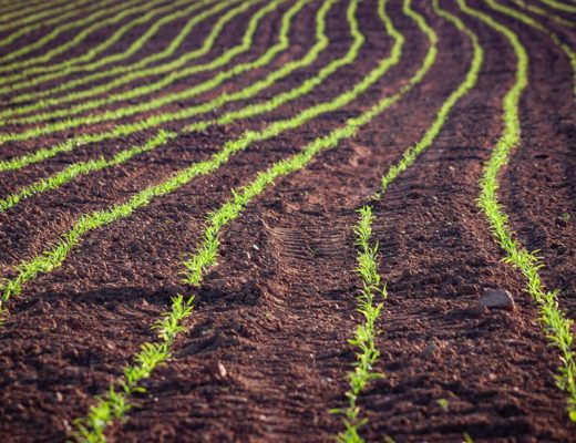no-tillage agriculture - Photo by Craig Cooper on Unsplash