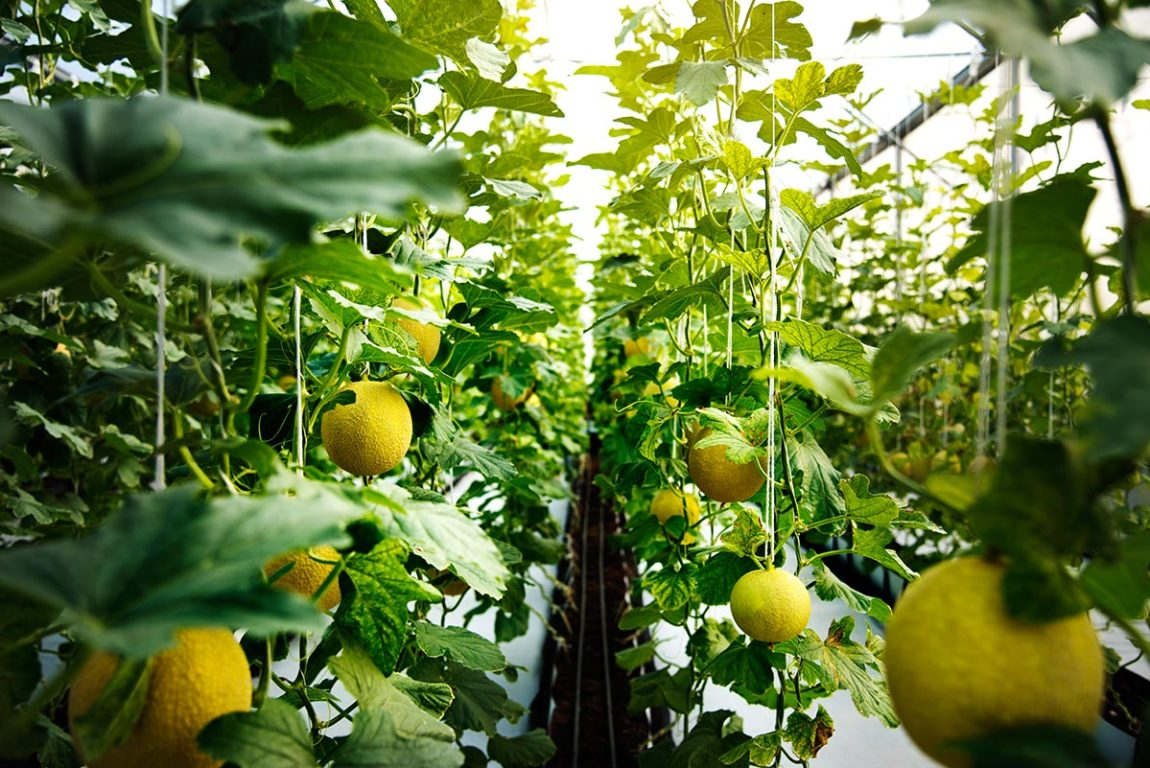 How to reduce energy costs in greenhouses
