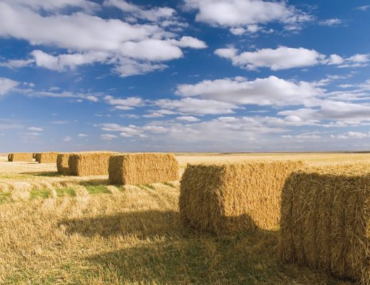 Silage bags over traditional silage