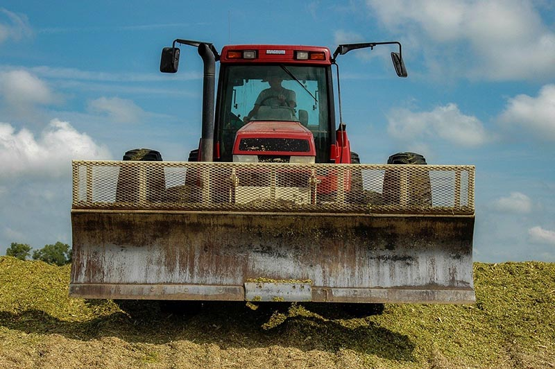 Silage in the meat industry
