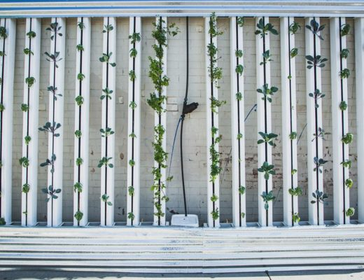 Vertical agriculture. Photo by BrightAgrotech https://www.needpix.com/photo/439825/hydroponics-green-wall-zipgrow-vertical-farm-vertical-garden-lettuce-free-pictures-free-photos-free-images