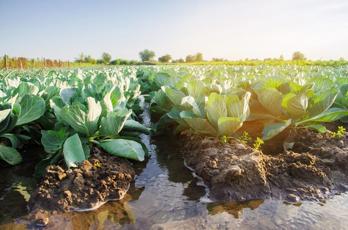 Water consumption in agriculture