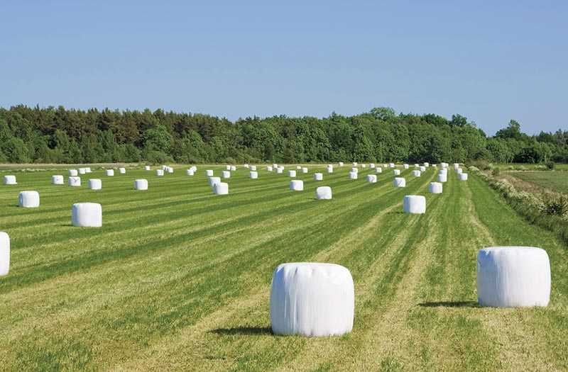 Why is it important how densely packed are hay bales to improve livestock nutrition